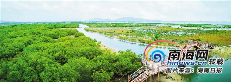陵水新村澙湖、黎安澙湖生态修复显成效白鹭来得更频繁也更多了