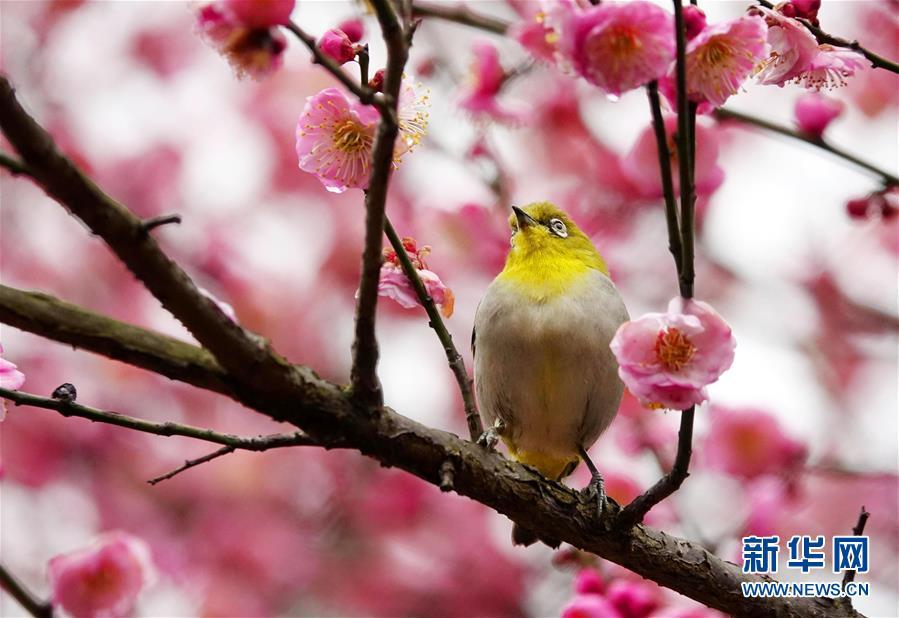 #(环境)(3)梅花开 引鸟来