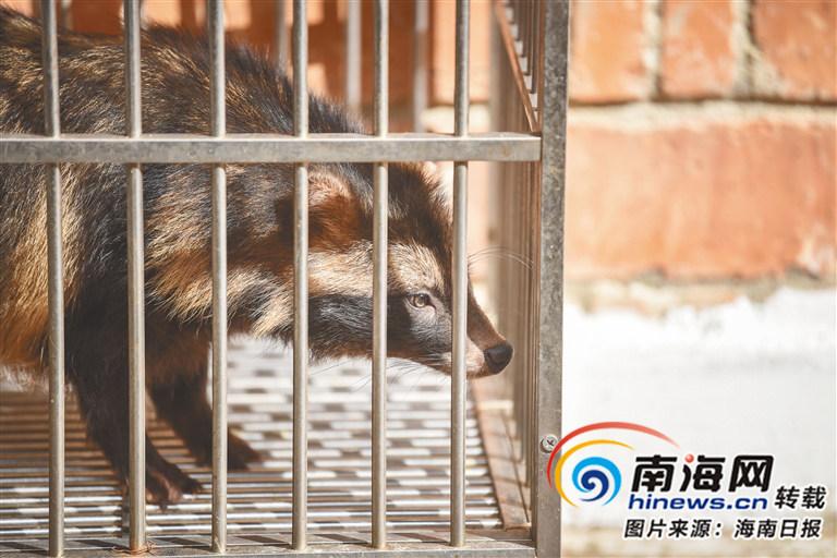 海口市陆生野生动物救护中心救助的小动物.
