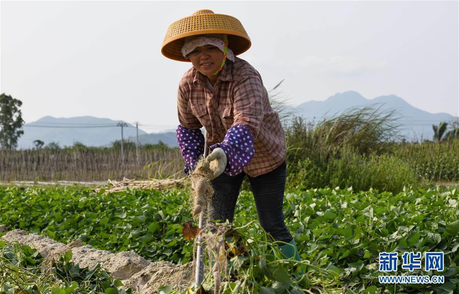 (经济)(2)海南万宁:春分农事忙