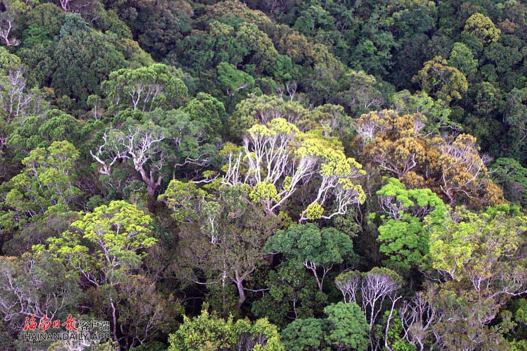 海南岛热带雨林_组图丨美丽而神奇的海南热带雨林-新闻中心-南海网
