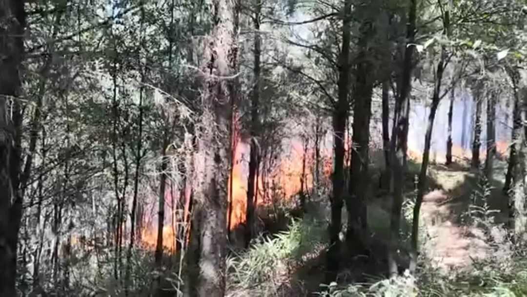 云南昆明龙池山火场明火全线扑灭起火原因还在调查中