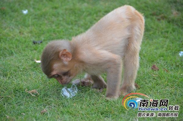 """特写镜头:海南热带野生动植物园""""花式""""防暑"""