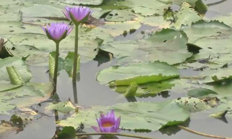 椰视频 | 赏莲、游湖、摘瓜果……海口美丽乡村醉游人