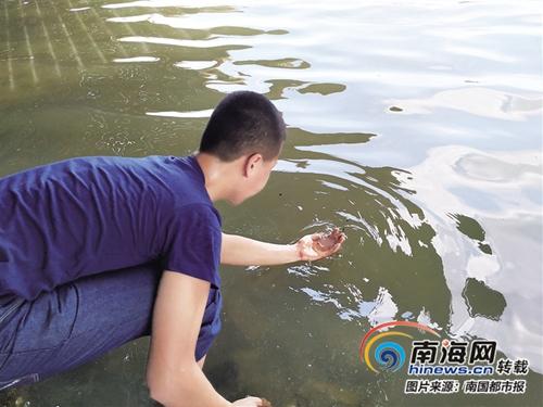 <b>有毒不要随意触碰!海口新埠岛海边现大量水母 不少游客仍在把玩</b>