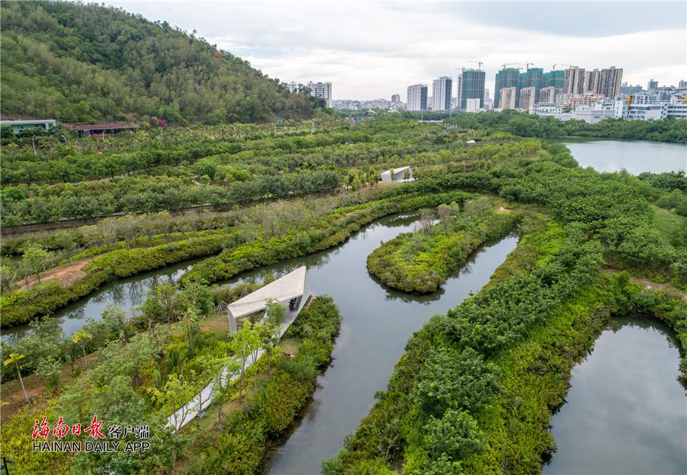 20190625ww三亚红树林湿地公园08_副本.jpg