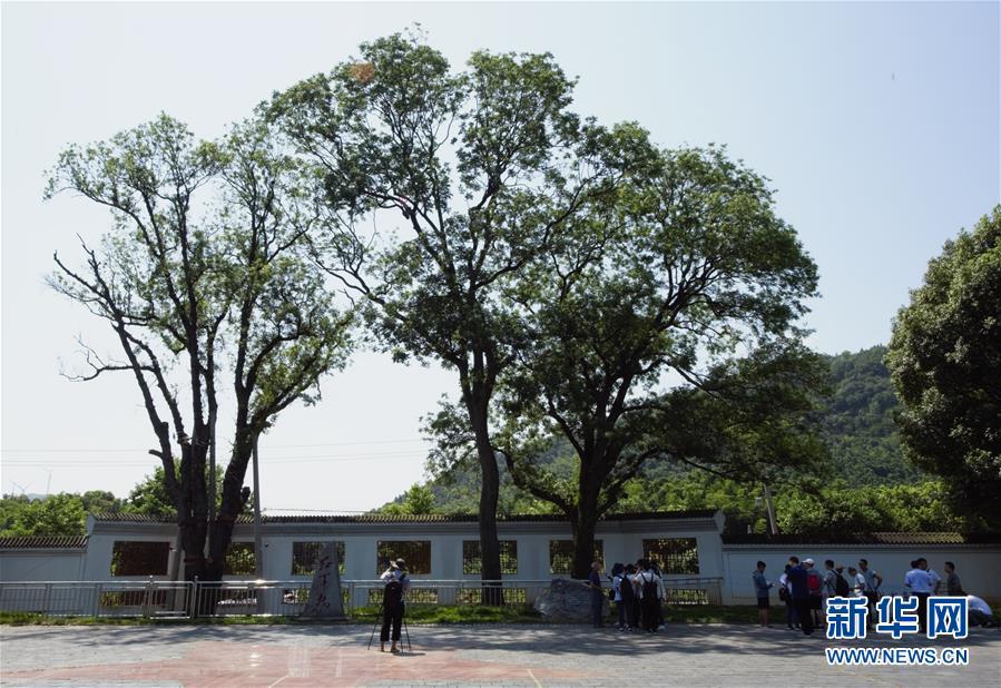 """(壮丽70年·奋斗新时代——记者再走长征路·图文互动)(6)""""红军树""""下忆初心、守初心"""
