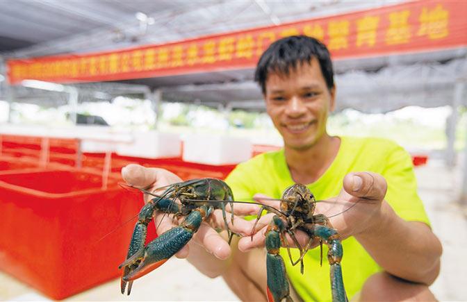 """陵水光坡镇大力发展高效水产养殖产业 淡水龙虾""""游""""出脱贫路"""