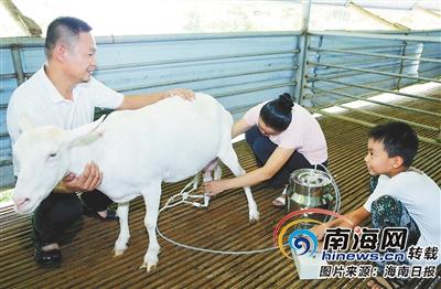 "<b>脱贫路上""领头羊"" 澄迈县永发镇大学生吴一凡返乡创业</b>"