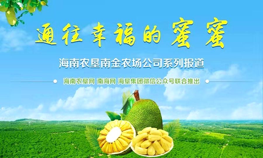 南金农场公司拓宽菠萝蜜销售渠道 每年产7千万斤瓜果供全国
