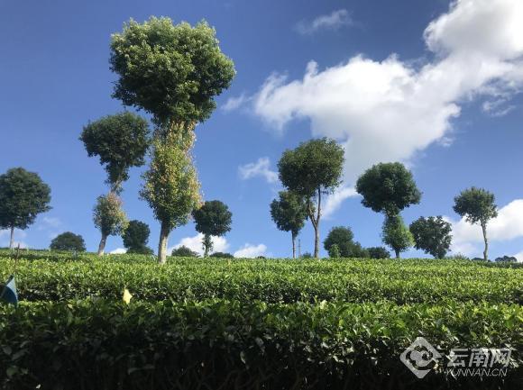 """【生态有机看思茅】经济、生态、社会效益""""多"""
