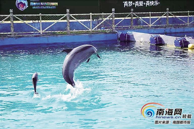 萌翻了!一只点斑原海豚三亚诞生