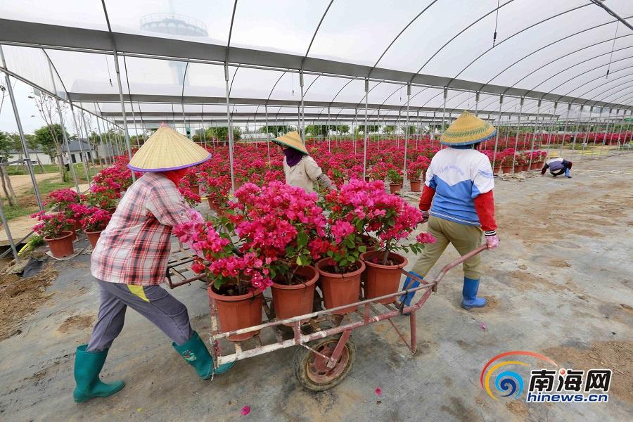 """昌江积极发展热带园林花卉产业 打造""""四季花海"""