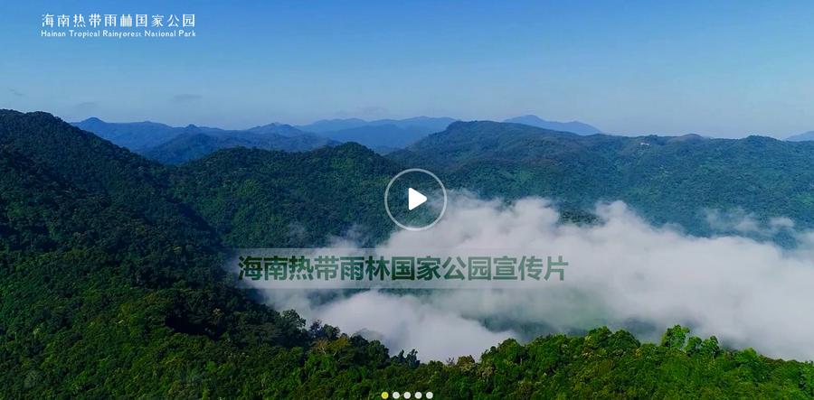 海南热带雨林国家公园官方网站正式上线 网友动动鼠标就能漫步雨林
