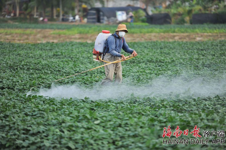 组图 | 海南从生产源头抓常年蔬菜供应