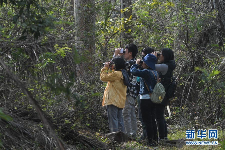 (环保)(1)海南举行2020年水鸟调查