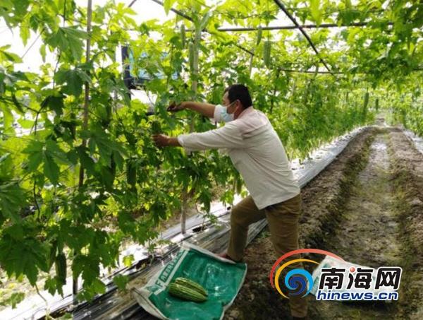 海垦集团多渠道组织保障疫情期间瓜菜副食供应