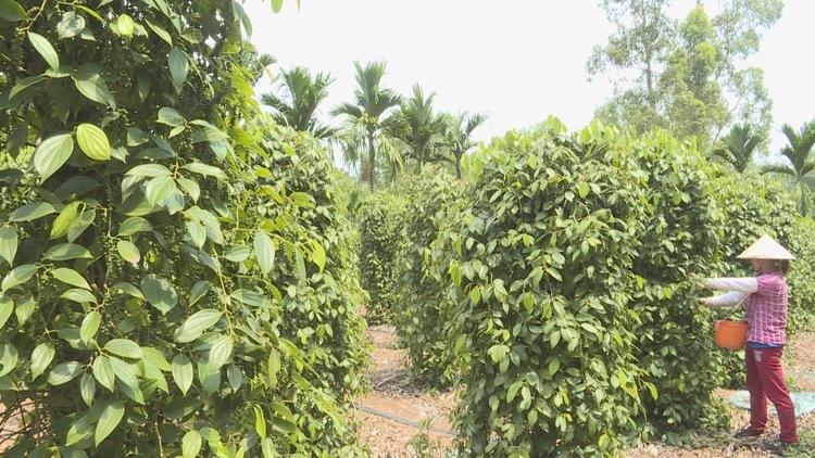 琼海特色农产品促进农业增效 农民增收