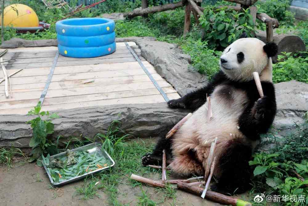 端午节,动物吃的是啥粽子?