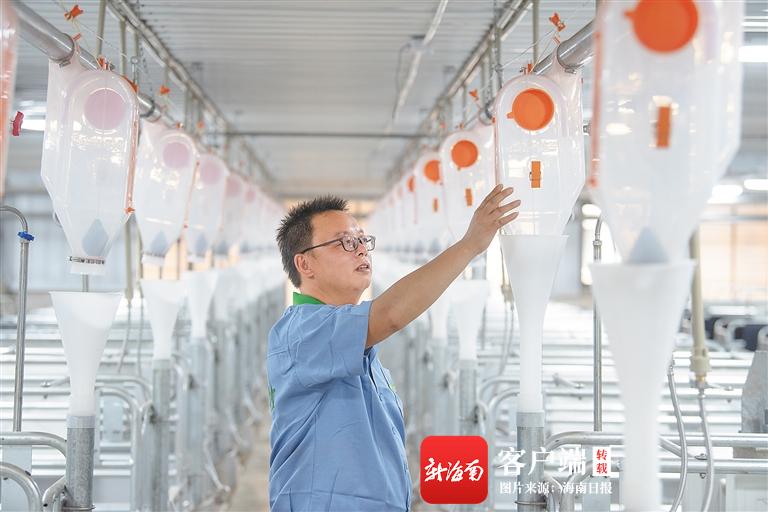 """海垦畜牧集团推进生猪产业转型升级 """"智能养猪""""节能高效"""