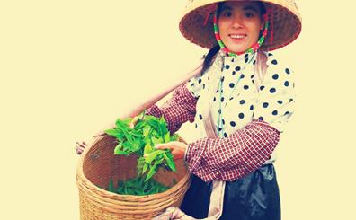 走进国家公园 探访热带雨林 | 琼中新伟茶厂还原自然生长环境 培育雨林生态茶品牌