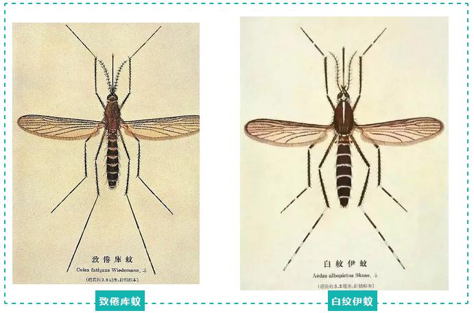 海南日报健康融媒工作室|为啥蚊子独宠你?可不止血型那么简单……