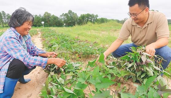 定安白堆村:创新举措整治人居环境 多方协作发展特色产业