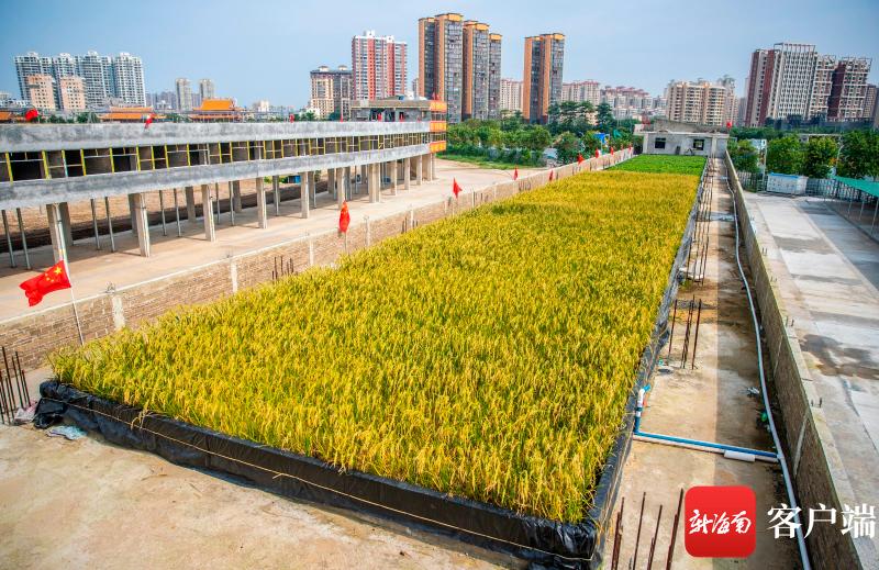 楼顶能种水稻还能养鱼!海口这个空中立体农业有意思