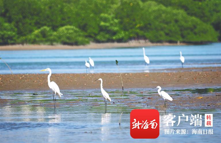 海南周刊 | 三亚河:今昔河事 一城水系