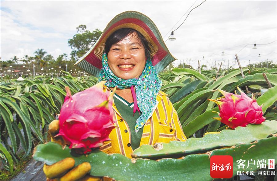 海南因村施策探索发展农村市场主体、壮大农村集体经济
