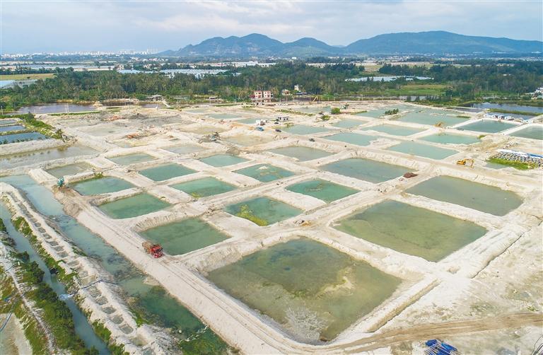陵水水产南繁苗种项目:预计明年底建成投产