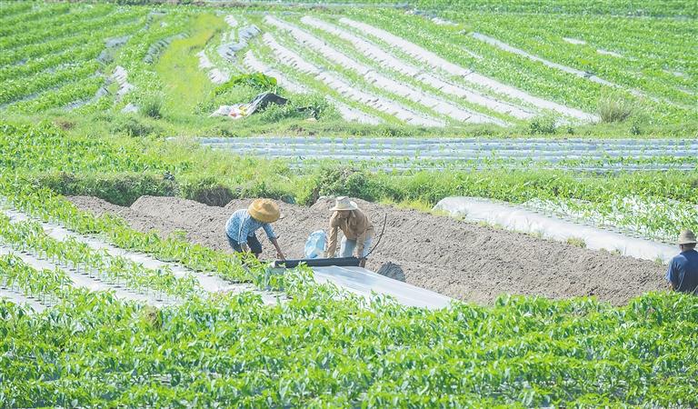 """琼海围绕""""三增""""目标 助推热带特色高效农业提质升级"""