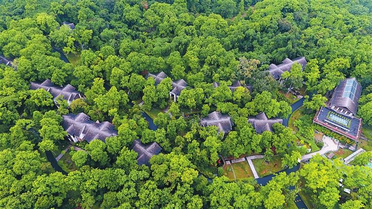 五指山在全国首创生态科技特派员制度,助力热带山地高效农业发展