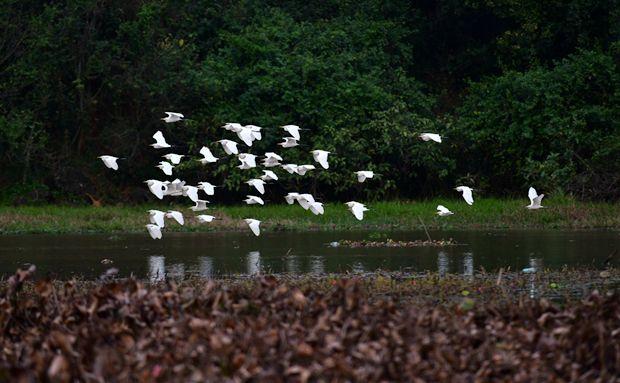 原创组图 | 领略海口五源河国家湿地公园生态美