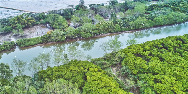 海口东寨港湿地 生态修复工程建设完工