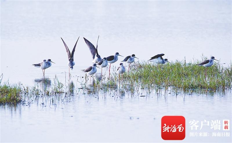 海南代表委员环抱生态文明建立建言献策