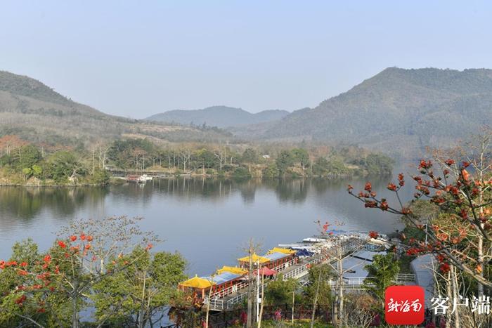 木棉花开春意浓 来昌化江畔赴一场木棉之约