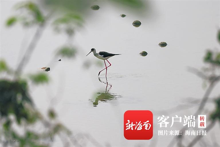 自然地理摄影师边缘:追鸟万里 行摄无疆