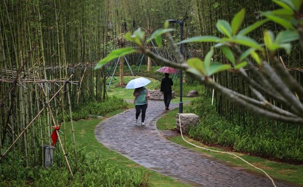 椰视频 | 海口解放西路添新绿 带你看闹市中的竹林公园