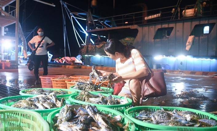 曉峰(feng)近(jin)距離 三(san)亞︰開漁歸來漁港忙