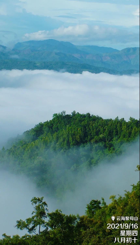 海南琼中黎母山:林海莽莽 云飘雾绕