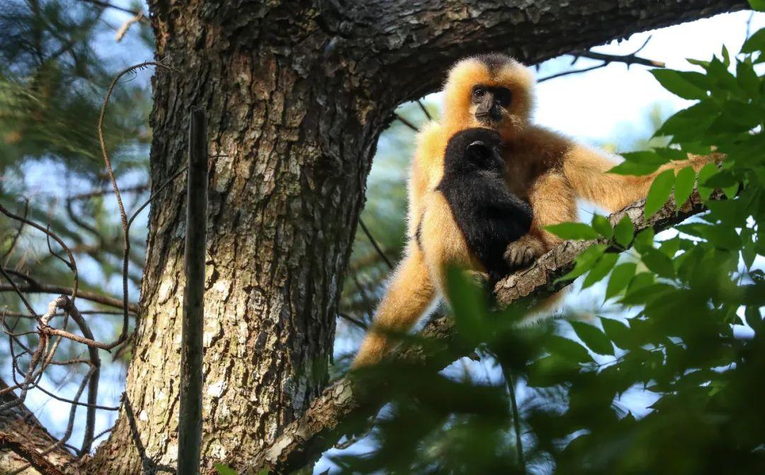 """海南3个生物多样性保护项目入选全球""""生物多样性100+案例"""""""