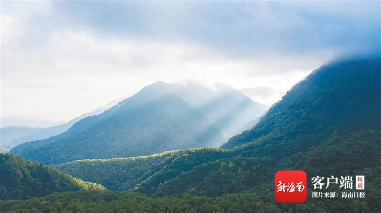 走进海南热带雨林国家公园体制试点区五指山片区:万木峥嵘蝶争艳