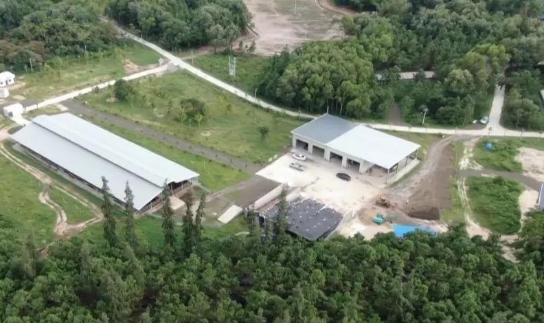 文昌市公坡镇水北村:林下养蚯蚓 生态经济效益双丰收