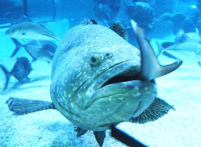 最凶猛的鱼_全球生活新门户 环球时报旗下网站