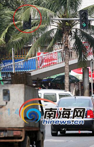 椰子树叶茂盛遮挡红灯 司机闯了红灯仍不知[图]