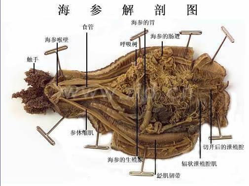 昆虫内部结构图