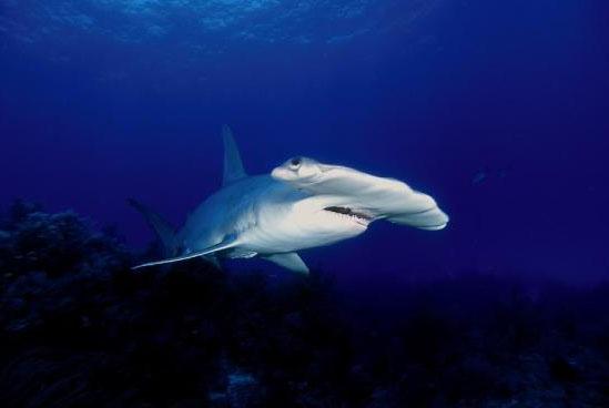 鲨鱼鳍和人的手臂具有相同基因