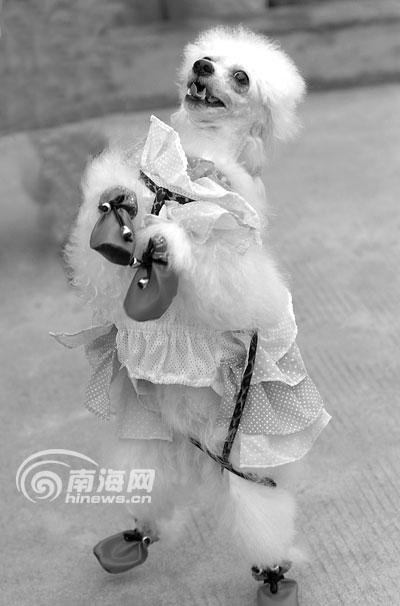 北京市保护小动物协会提供的一项调查结果表明,北京人一年花在宠物