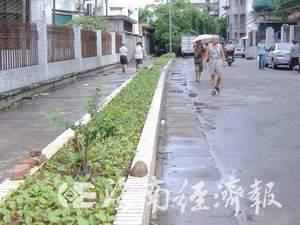 海口人行道绿化花池变菜池 粪便施肥臭死人